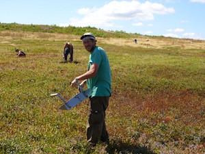 2010 blueberry raking plus 179.jpg