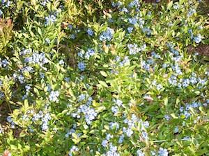 2010 blueberry raking plus 193.jpg