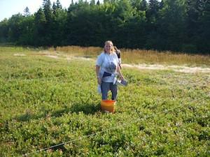 2010 blueberry raking plus 127.jpg