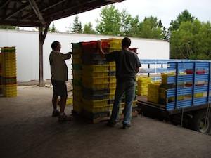 2010 blueberry raking plus 163.jpg
