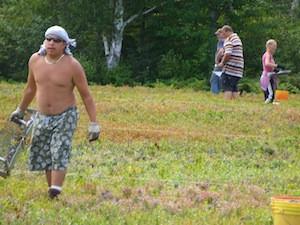 2010 blueberry raking plus 157.jpg