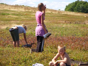 2010 blueberry raking plus 173.jpg