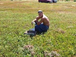 2010 blueberry raking plus 181.jpg
