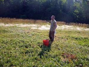 2010 blueberry raking plus 126.jpg