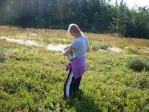 2010 blueberry raking plus 124.jpg
