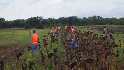 Lawrence, KS Youth Dove Hunt