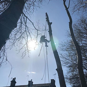 Tree removal #mimtreeservices #climbing