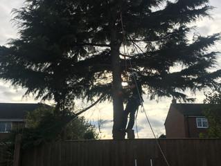 Pine tree removal Wakefield