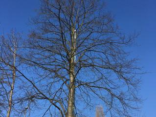 Tree surgery in Leeds