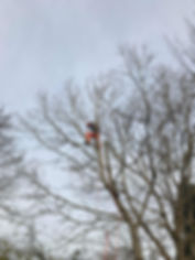 Tree removal in Leeds