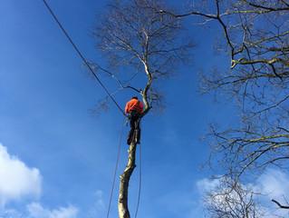 Tree felling york