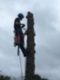 Commercial tree removal Yorkshire