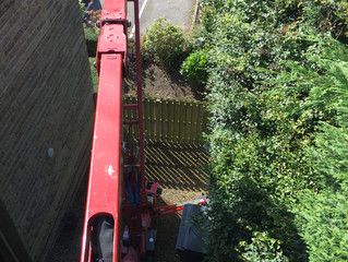 Reducing conifer height