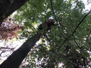 After a busy day tree cutting in Scholes, Leeds our tree surgeryteam were called out to Wakefield t