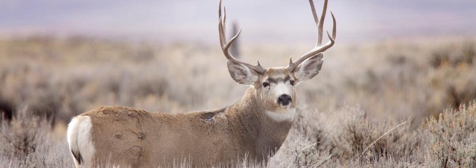 Wildlife64ed.jpg