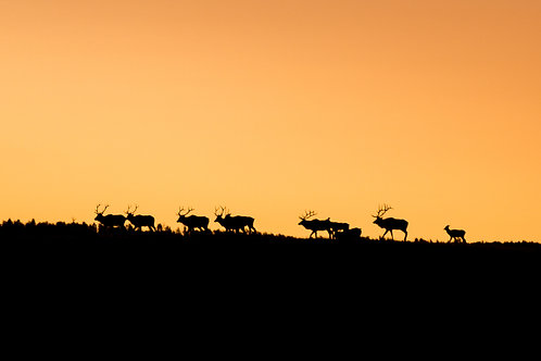 The March at Sunrise