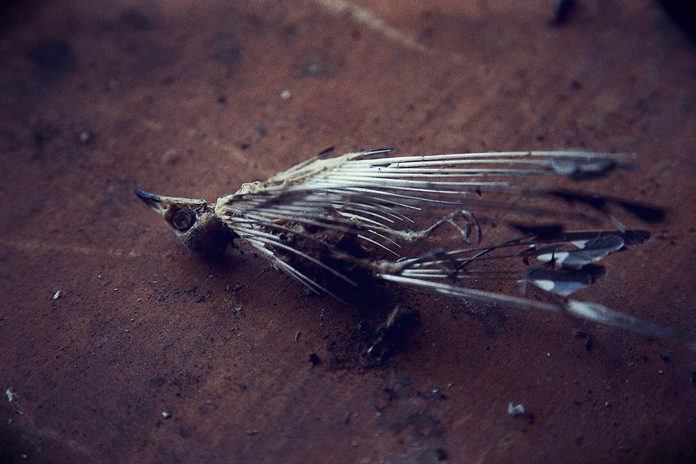 dead bird at quarantine station