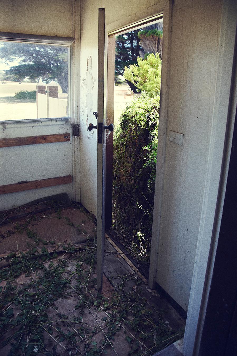 plants invading abandoned quarantine station