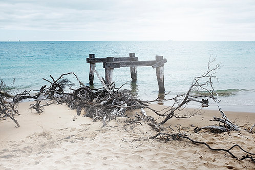 driftwood at the beach in australia