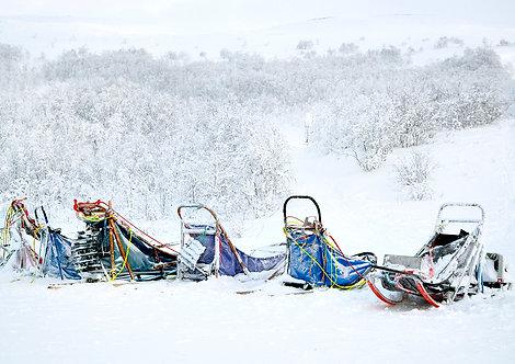 huskies sledges in arctic winter landscape