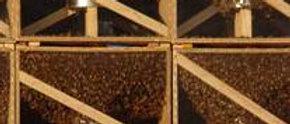 Essaim nu (paquet d'abeille)