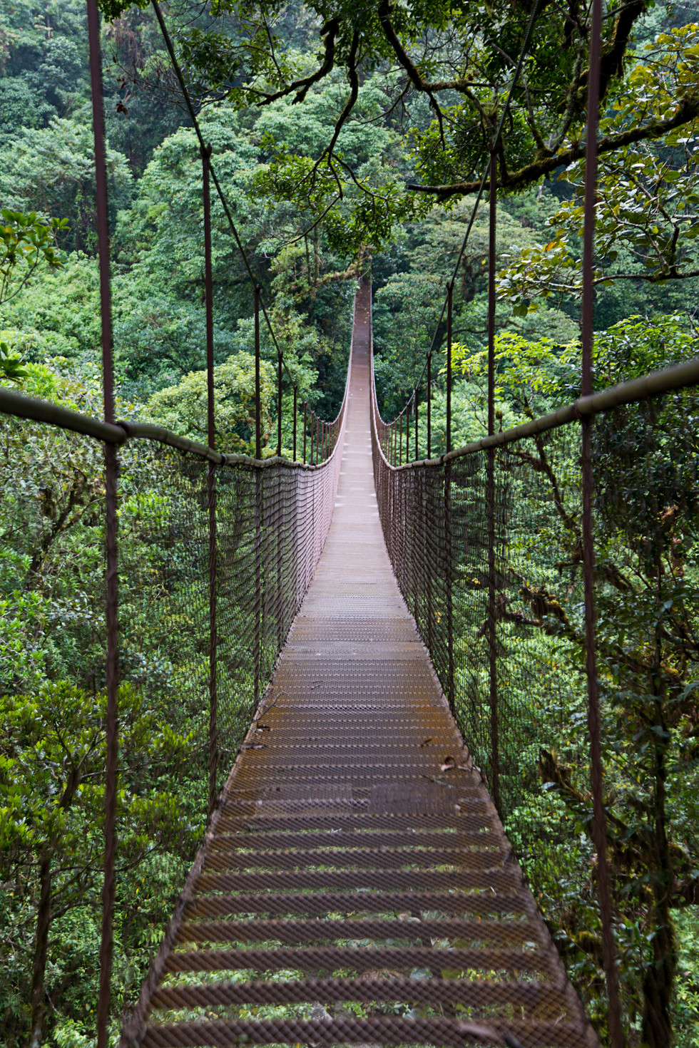 Hanging Bridges of Boquete