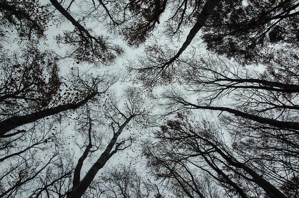Photo by Sirma Krusteva on Unsplash