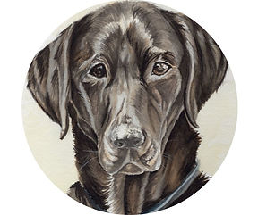 View Pet Portraits.jpg