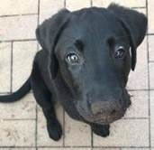 Maric Pup