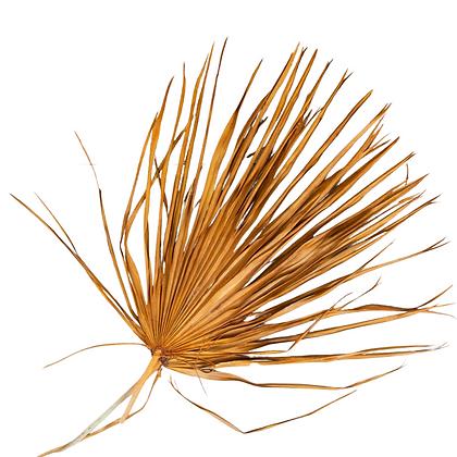 Mini Mustard Palm Leaf