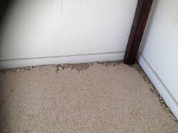 Carpet Beetle and Moth Damage. Treatment for Carpet Moth and Beetle in Wellington Hutt Valley and Porirua