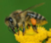 Honey bee hive relocation and pest control in Wellington, Hutt Valley and Porirua