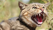 Get rid of Feral Cats, Feral Cat Removal in Wellington Hutt Valley and Porirua