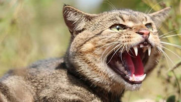 Feral Cat Control, trapping and removal humanely in Wellington Hutt Valley and Porirua