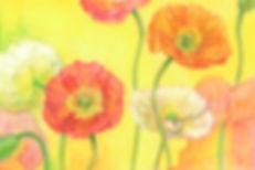 本poppy.jpg