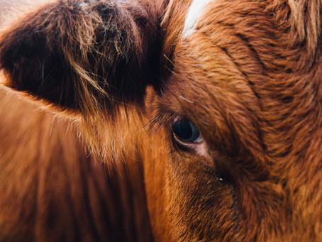 Veganism: A Conscious Revolution against Animal Agriculture