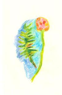flower-plant.jpg