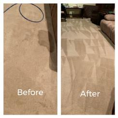 Carpet Staining
