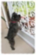 Screen Door Pet Guard, camco screen door pet guard, camco rv screen door grill, cheap screen door grille, cheap screen door grill, cheap screen door guard, how to protect screen door from pets, how to protect screen door from kids, prevent screen door rip