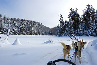 dogsledding, adventure, coaching, growth