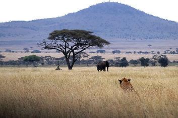 kilimanjaro, safari, zanzibar, adventure, coaching