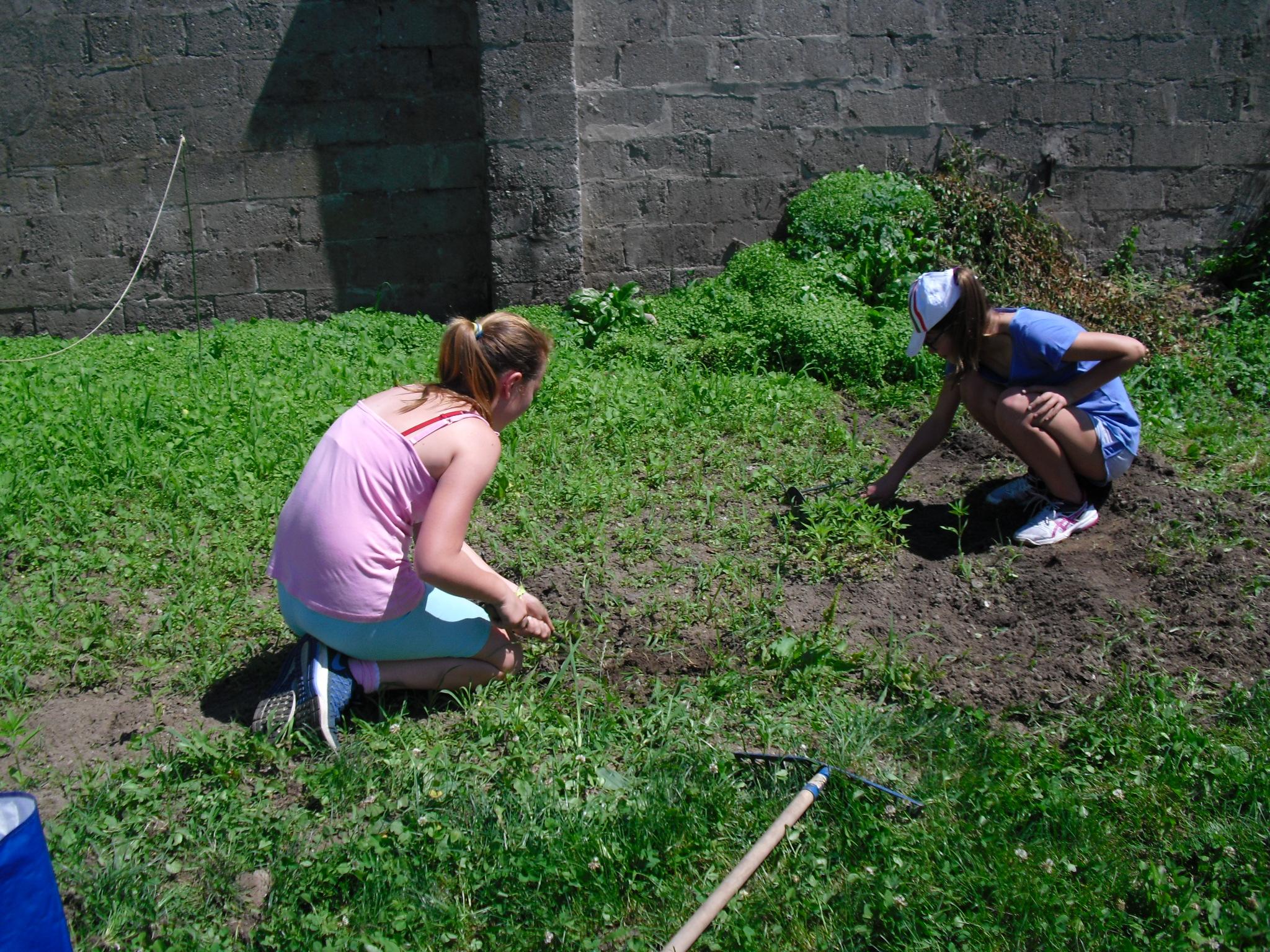 pulizia campo da erbacce 25 guigno b