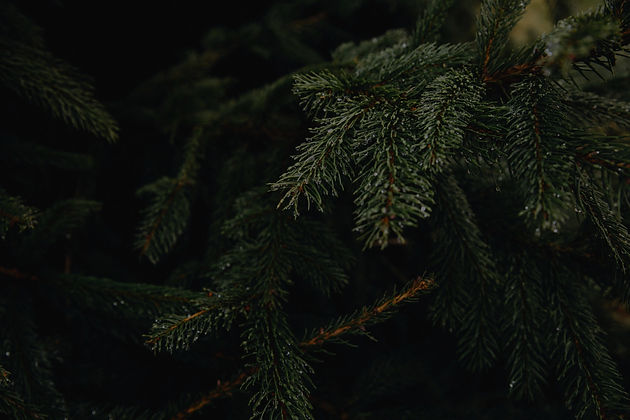 green%252520tree%252520leaves_edited_edi