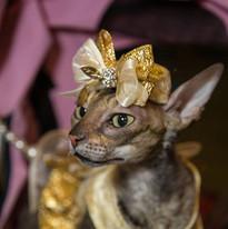 2015 Super Pet Expo_All Paws Pet Photogr