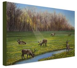 Jewell-meadow-Elks-wrapped2-Anita-Badami