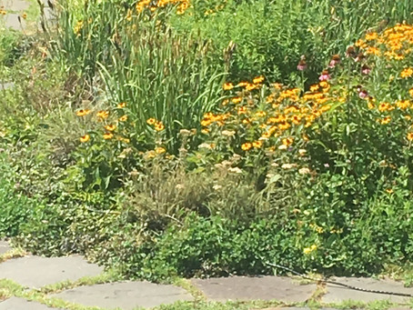 How's NYC's Green Infrastructure Program Performing?