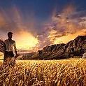 Harvest end times .jpg