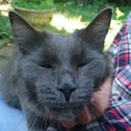 Локи и его чудесный нос