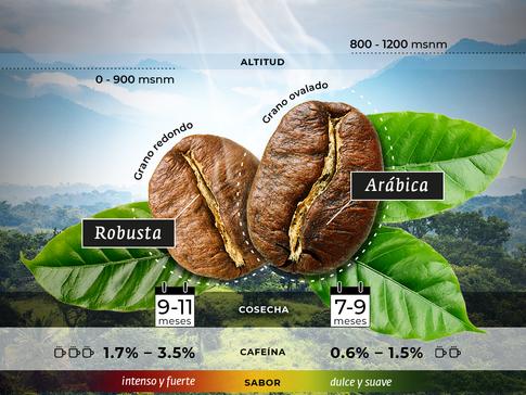robusta-arabica.png