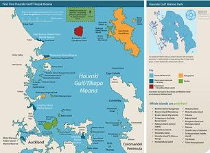 Pest-free Hauraki Gulf.jpg
